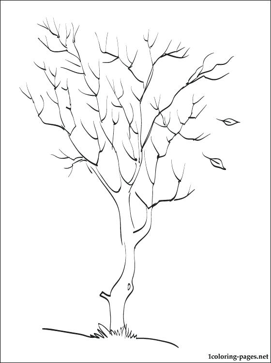 560x750 Tree Coloring Pages Autumn Tree Coloring Page Bare Tree Coloring