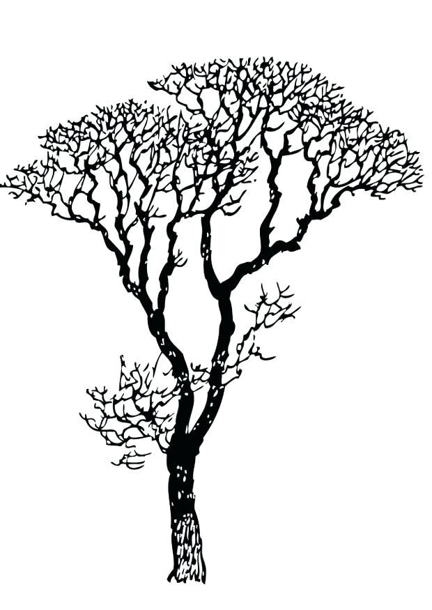 620x875 Unique Bare Tree Coloring Page And Tree Coloring Pages Bare Color