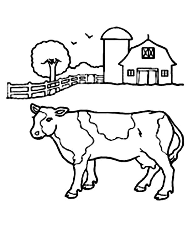 600x733 Cow In Front Of Barn Coloring Page