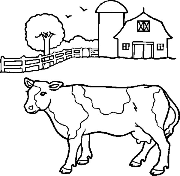 600x588 Dairy Cow In Front Of Barn Coloring Pages