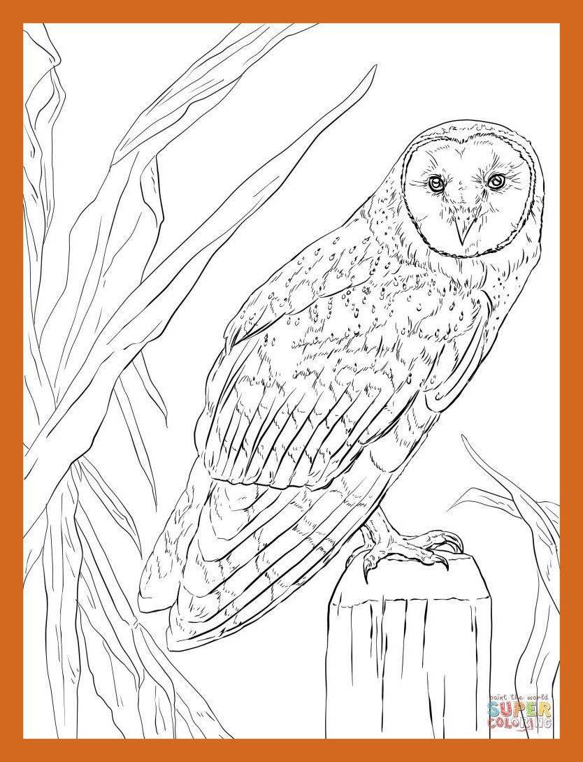 834x1090 Marvelous Coloring Pages Owl Baby For Kids Pict Of Inspiration