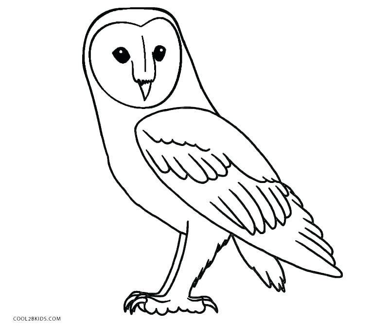 800x670 Owl Coloring Pages Free Printable Snowy Owl Coloring Pages Free