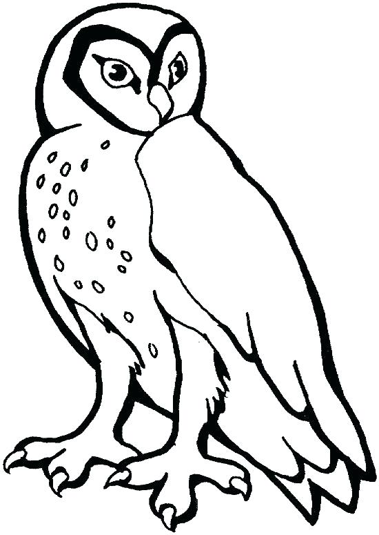 550x775 Barn Owl Coloring Page Pages Printable Murs