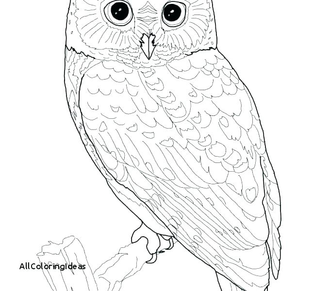 678x600 Barn Owl Coloring Page Snowy Owl Coloring Page Home Improvement