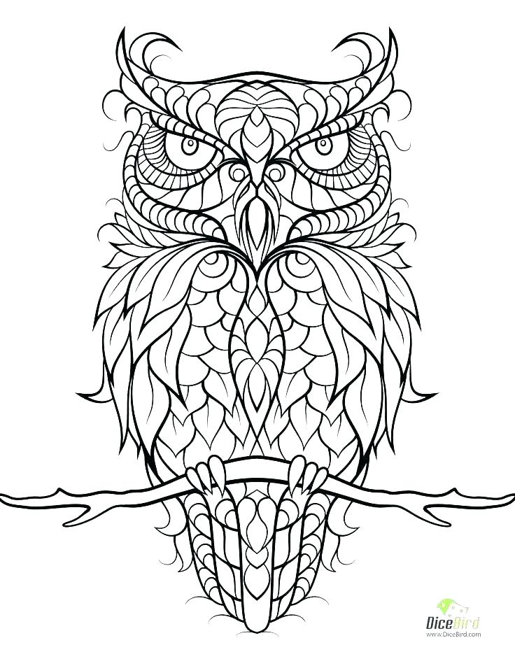 736x952 Barn Owl Coloring Pages Printable Owls Sheets Of C Fuhrer Von