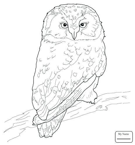 463x500 Coloring Pages Coloring Pages Owls With Coloring Medium Size