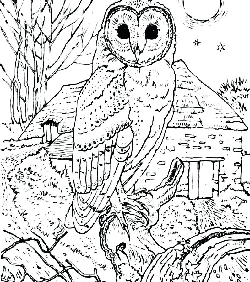796x900 Coloring Pages To Print Of Animals Barn Owl Coloring Page Free