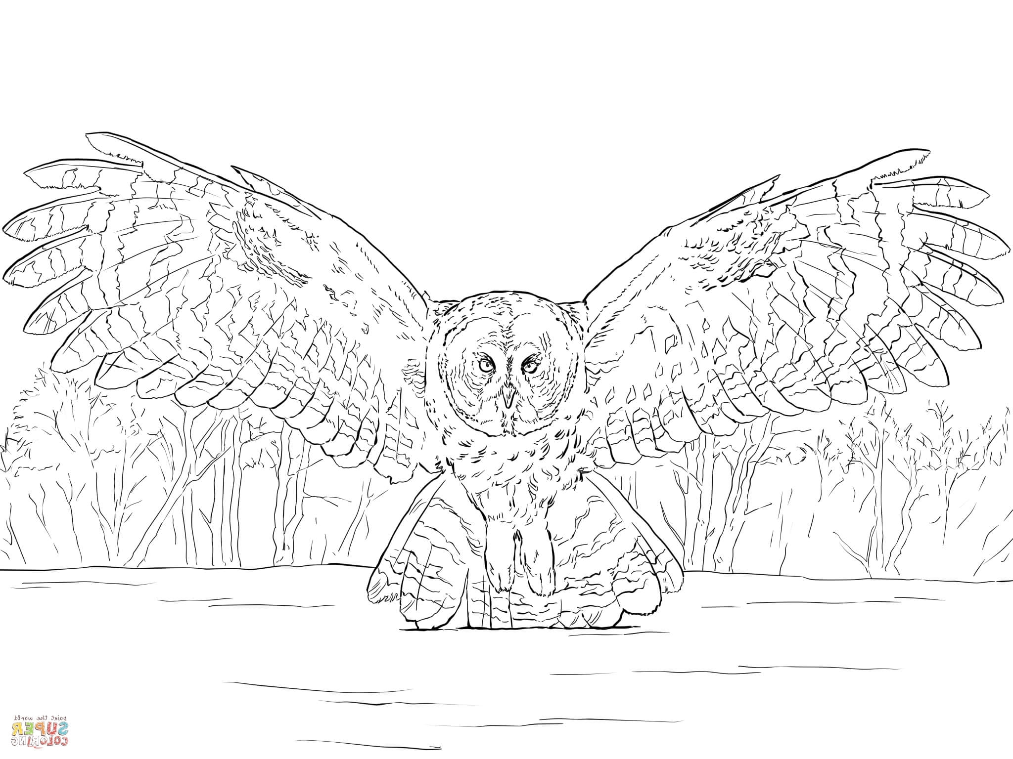 2048x1536 Great Gray Owl Coloring Page Barn Owl Coloring Page Gallery Photos