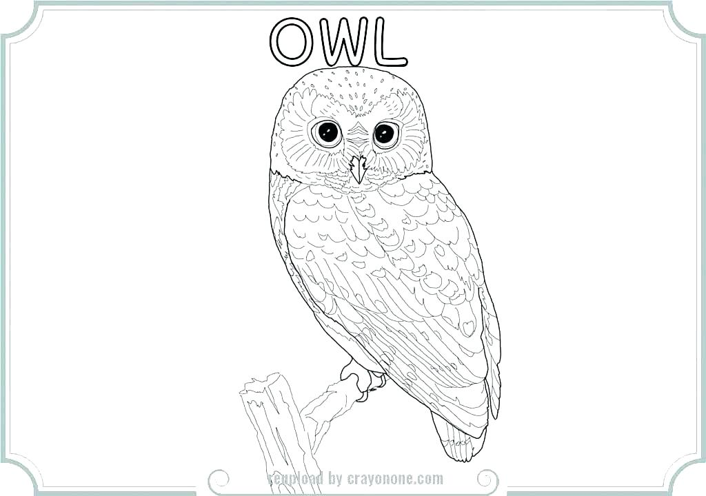1024x720 Owl Color Sheet Barn Owl Coloring Page Owl Printable Coloring