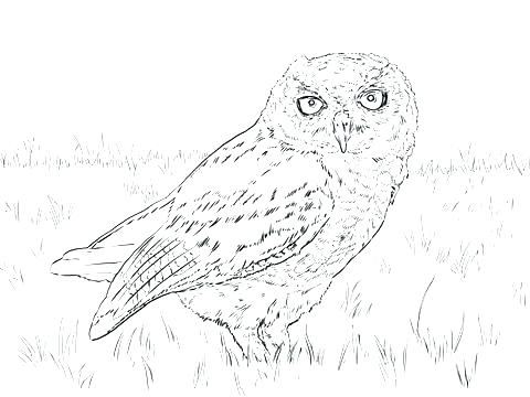 480x360 Owl Coloring Page Free Coloring Barn Owl Colouring Pages