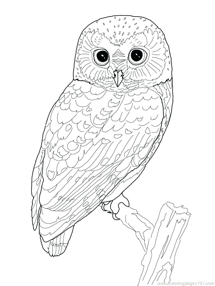 736x980 Printable Owl Coloring Pages Barn Owl Coloring Page Printable Owl