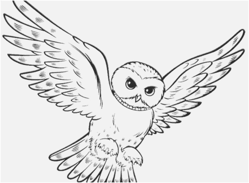 827x609 The Superior Pictures Printable Owl Coloring Pages Most Efficient