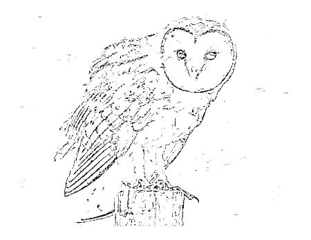 450x347 Unique Barn Owl Coloring Page And Pages Printable To Print Animal