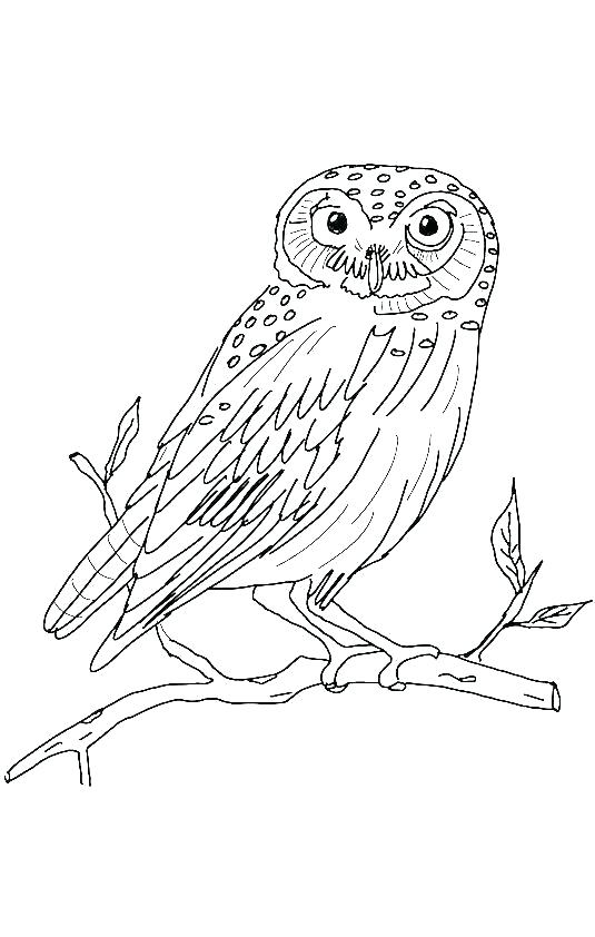 535x842 Barn Owl Coloring Page Barn Owl Coloring Page International