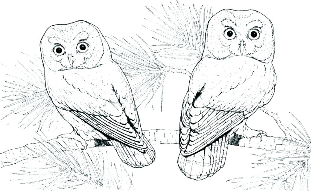 1043x644 Barn Owl Coloring Page Barn Owl Coloring Pages Printable Large
