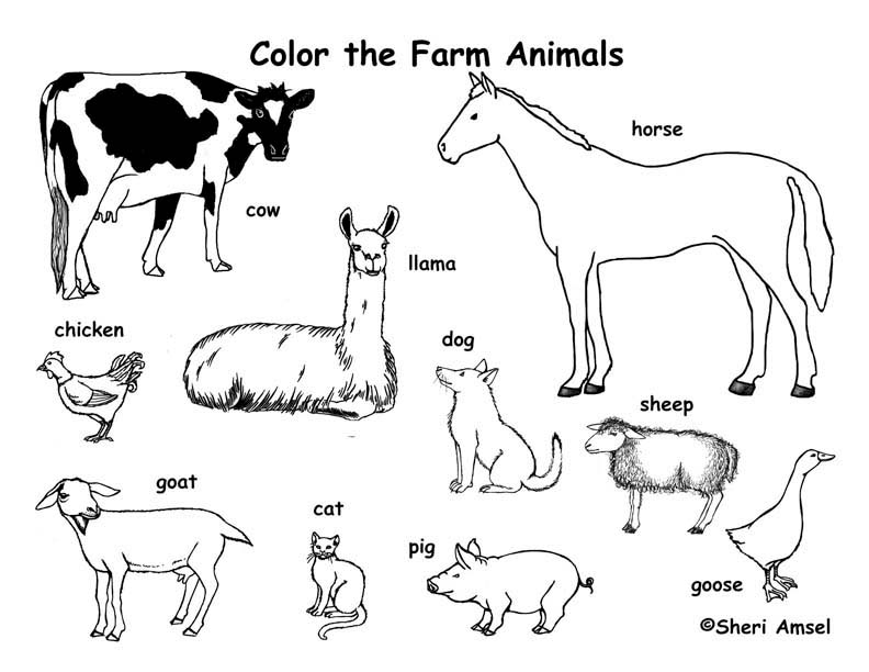792x612 Farm Animals Coloring Page