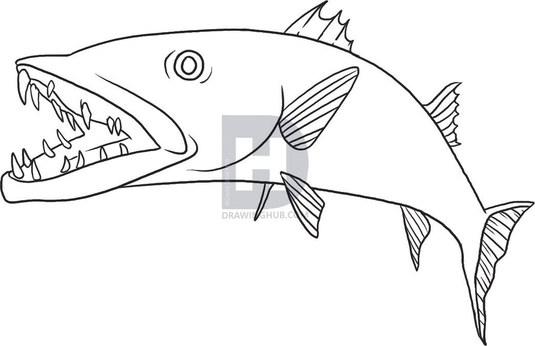 Barracuda Coloring Page