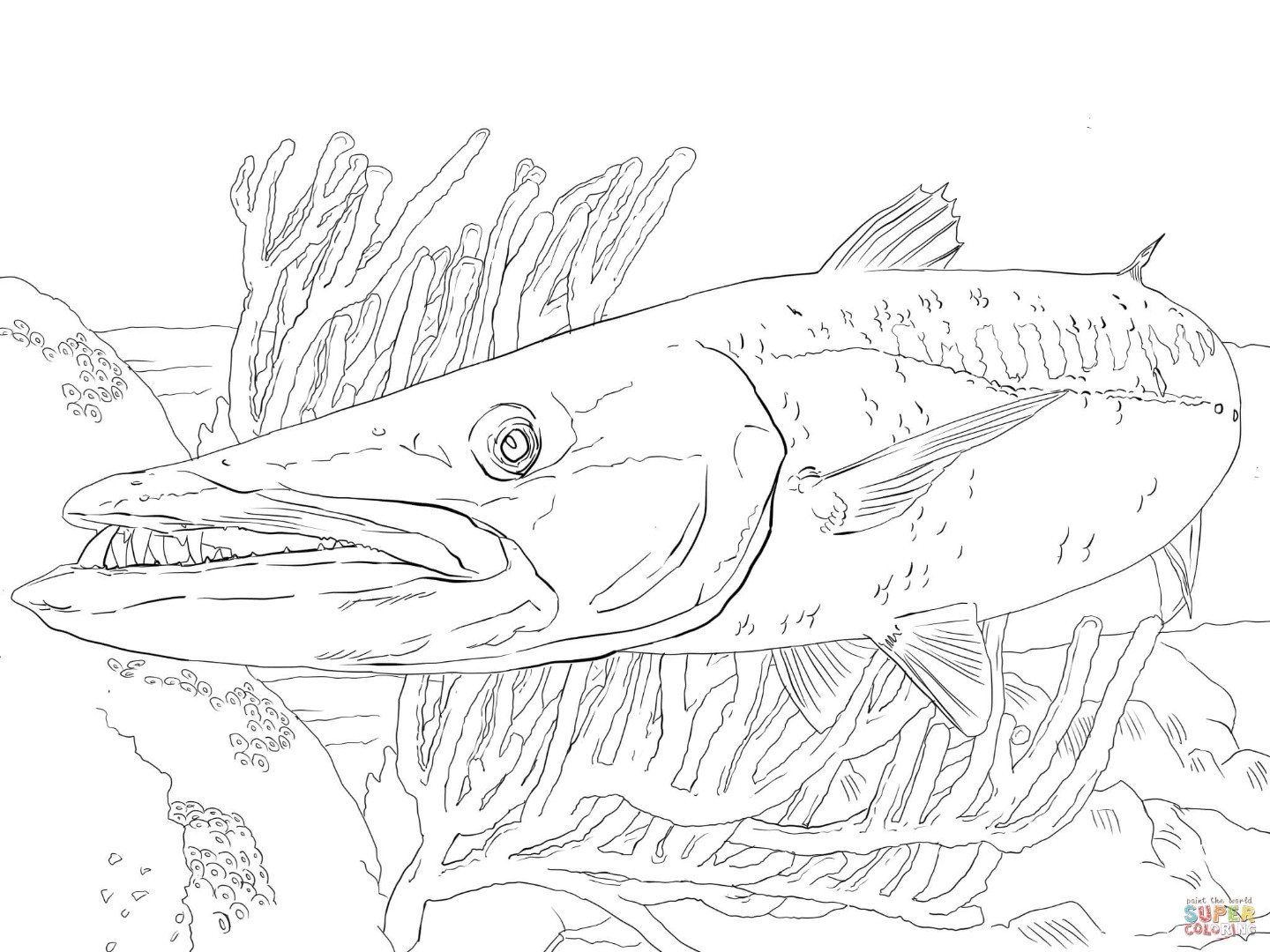 1440x1080 Barracuda Coloring Pages Download And Print For Free