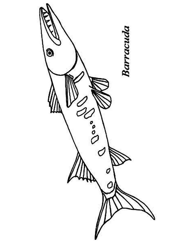 750x1000 Barracuda Coloring Pages Download And Print Barracuda Coloring Pages