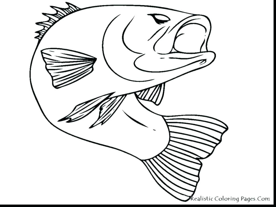 970x727 Realistic Fish Coloring Pages Realistic Fish Coloring Pages Ocean
