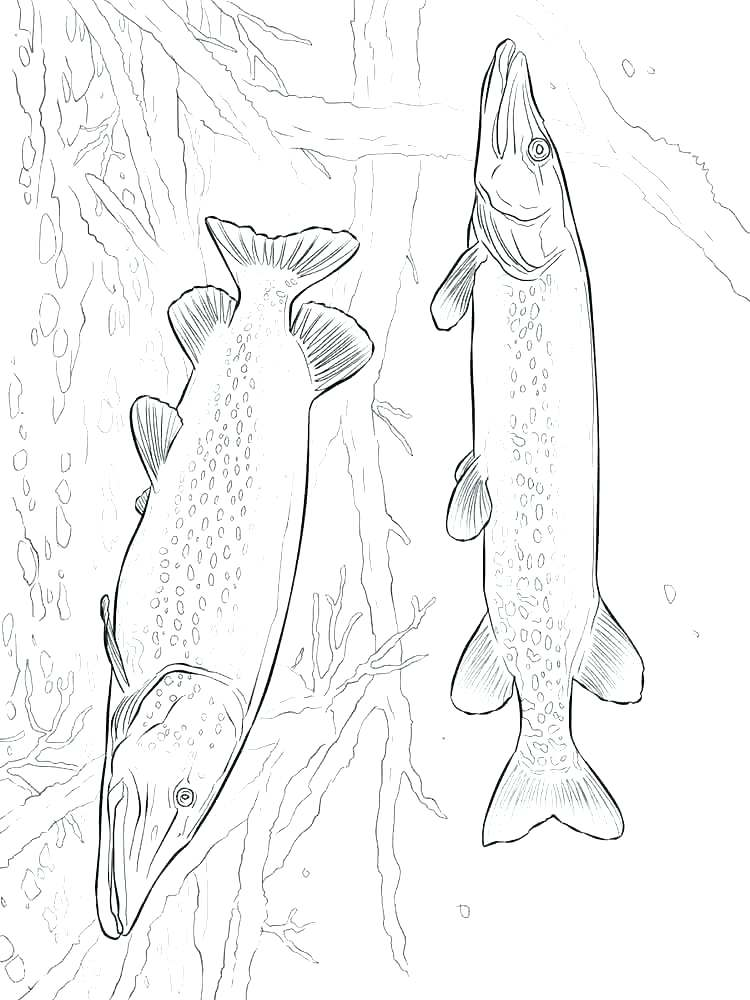750x1000 Salmon Coloring Pages Pout Pout Fish Colouring Page Printable