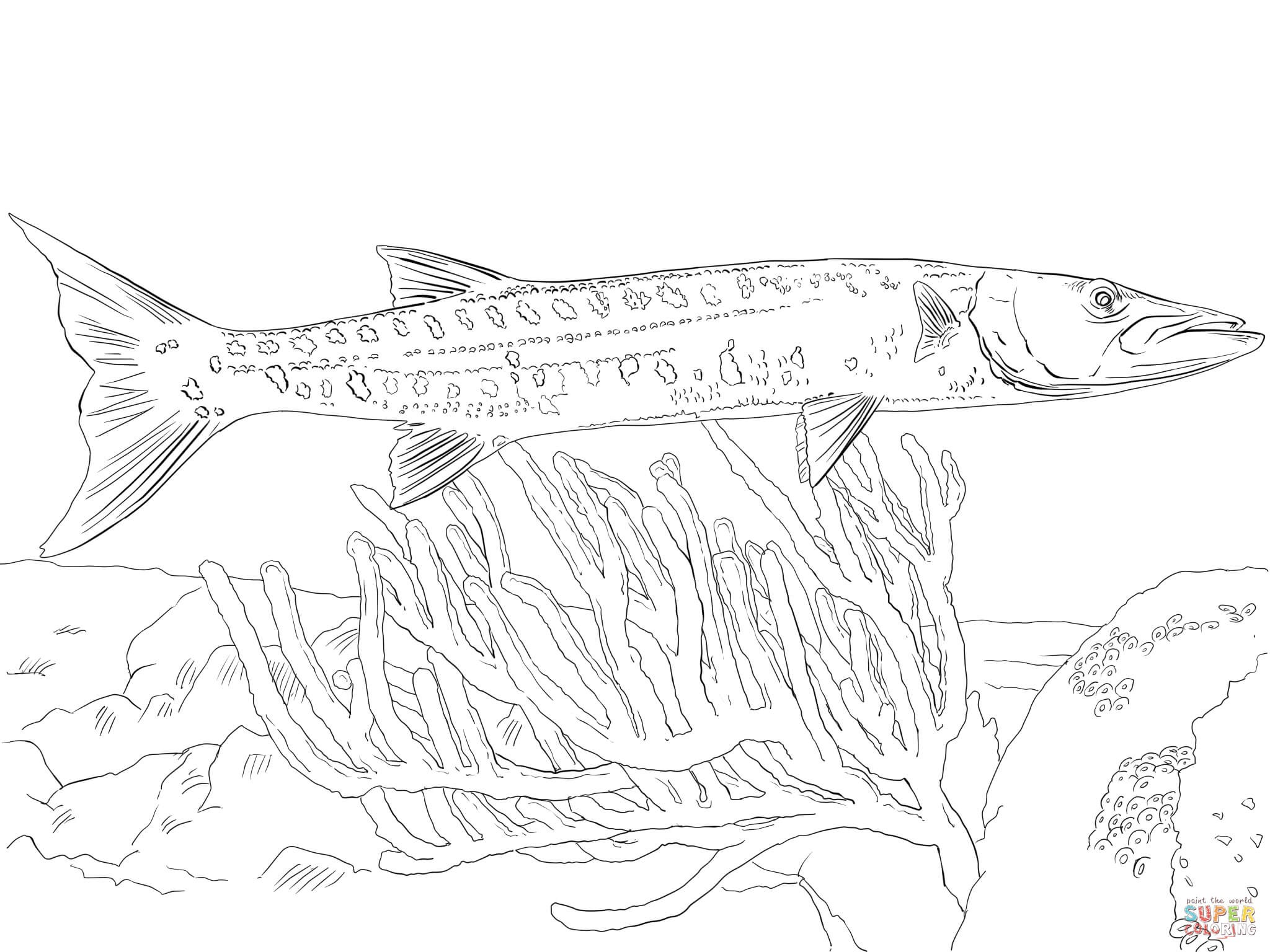 2048x1536 Barracuda Animal Coloring Pages Free Draw To Color