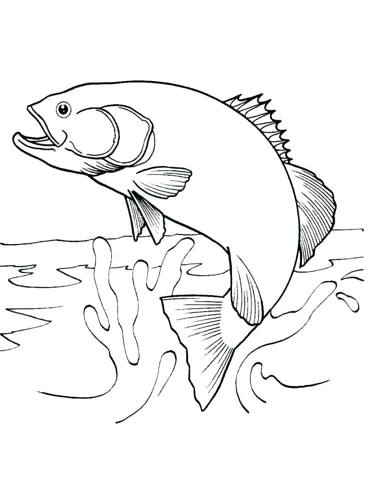 750x1000 Salmon Coloring Pages Salmon Coloring Page Salmon Coloring Pages