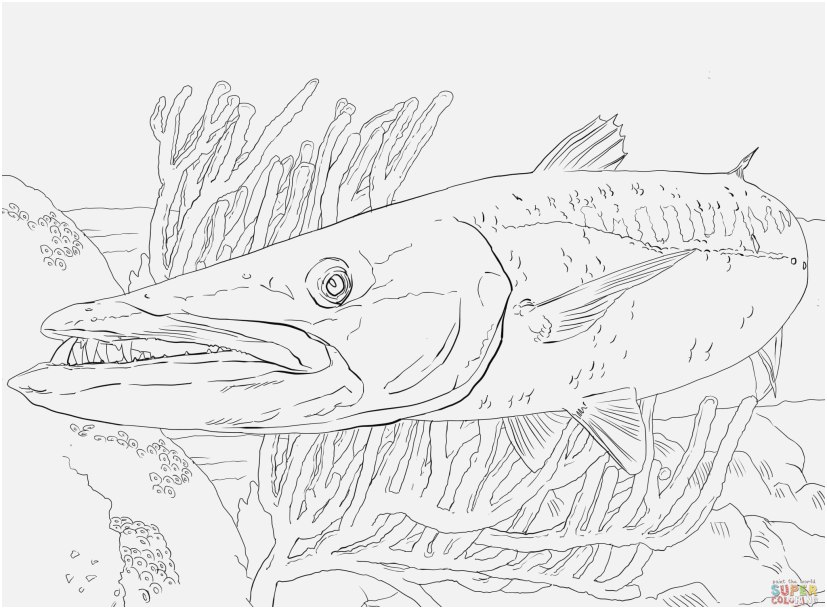 827x609 The Superior Footage Fish Coloring Sheet Innovative