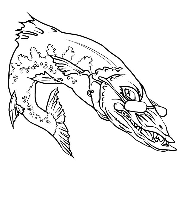 600x674 Barracuda Coloring Page Color Bros
