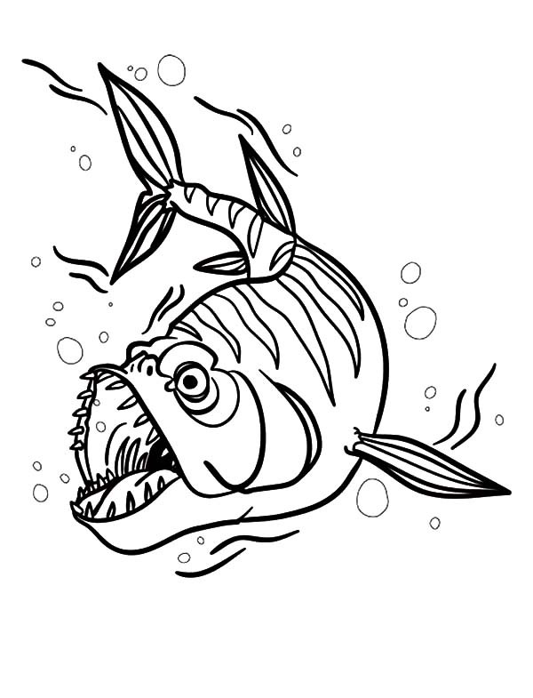 600x785 Barracuda Fish Attack Coloring Pages Best Place To Color
