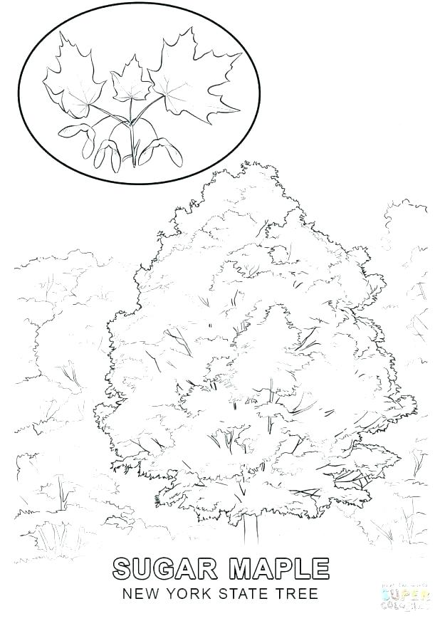618x872 Yankee Doodle Coloring Page