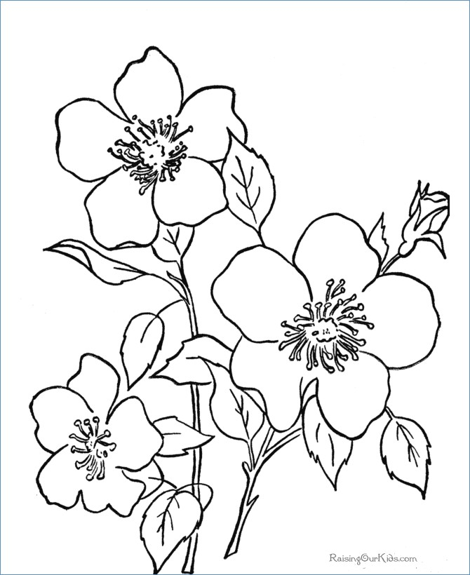 Coloring Pages For Kids Unicorn Adults Easy Halloween Flower Color