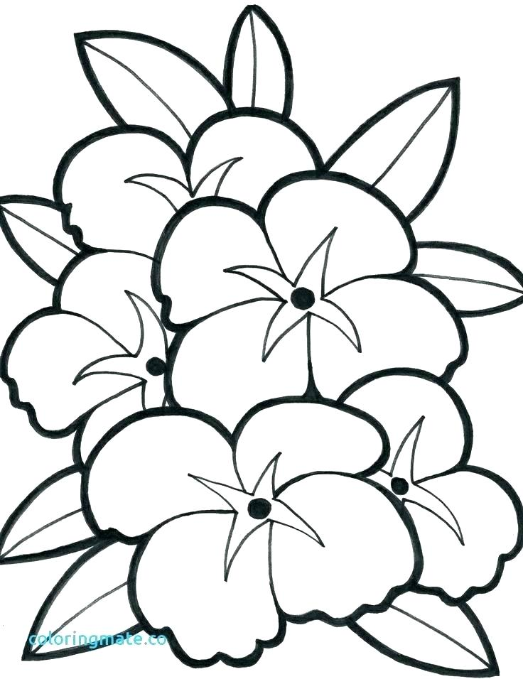 736x956 Simple Coloring Pages Flowers