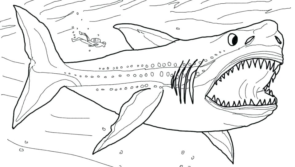 960x544 Mako Shark Coloring Page Shark Printable Pencil And In Color Shark