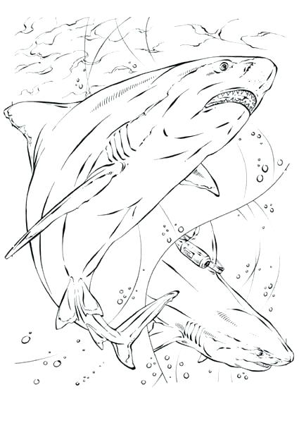 425x600 Shark Color Pages Tiger Shark Coloring Pages Free Shark Coloring