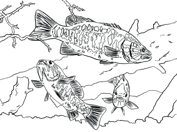 600x449 Coloring Pages Of Fish Bass Boat Coloring Pages Fish Catching