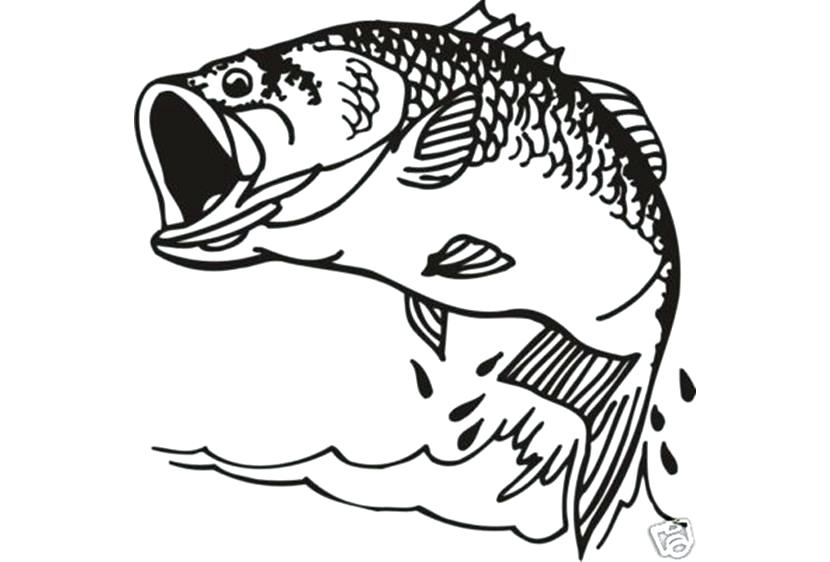 830x562 Printable Bass Fish Coloring Pages Fishing Page Ideas Co