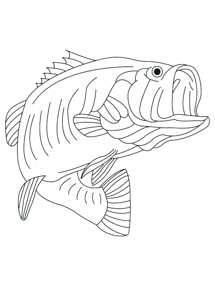 750x1000 Bass Fish Coloring Pages
