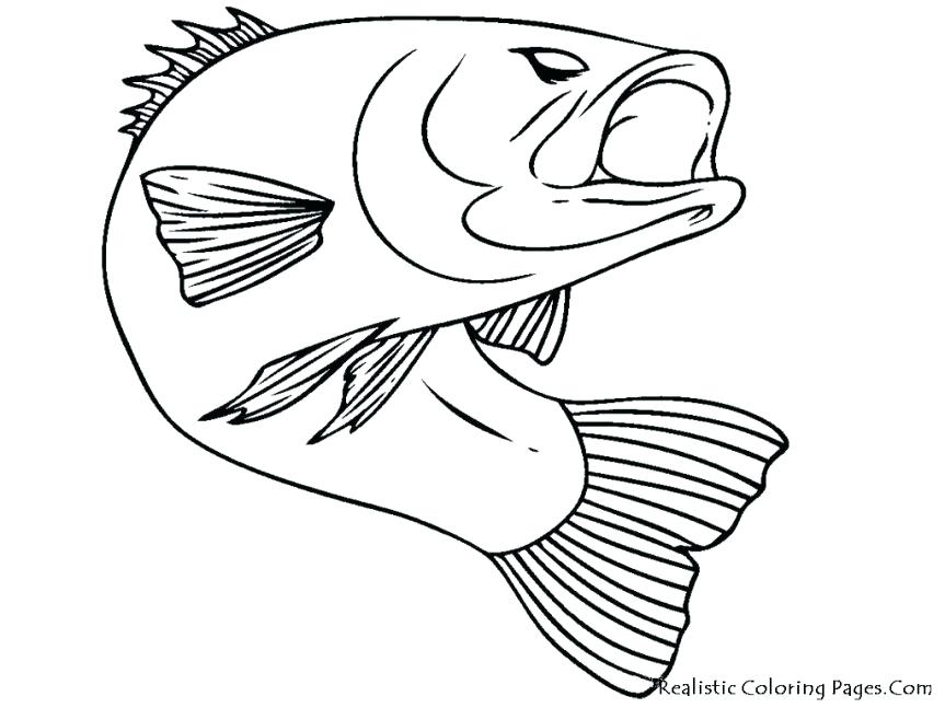 863x647 Bass Coloring Pages Bass Fish Picture Coloring Pages Bass Coloring