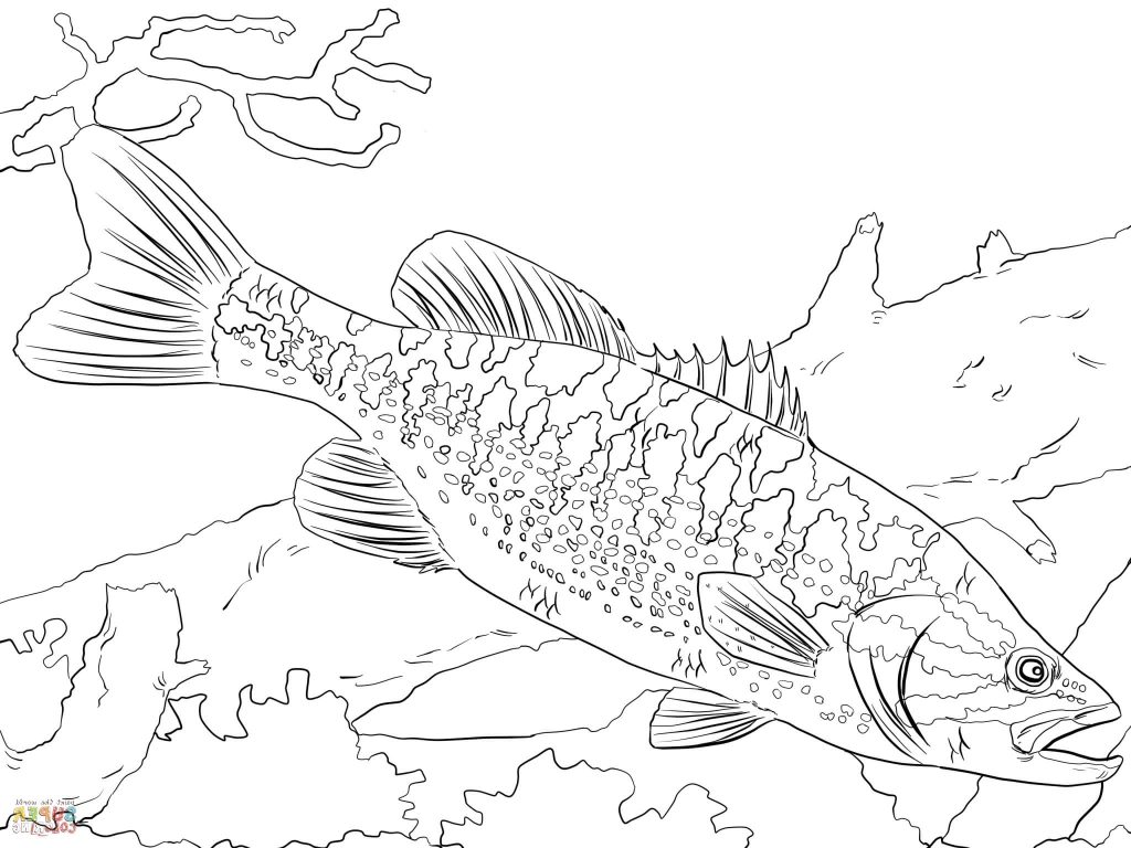 1024x768 Bass Coloring Pages