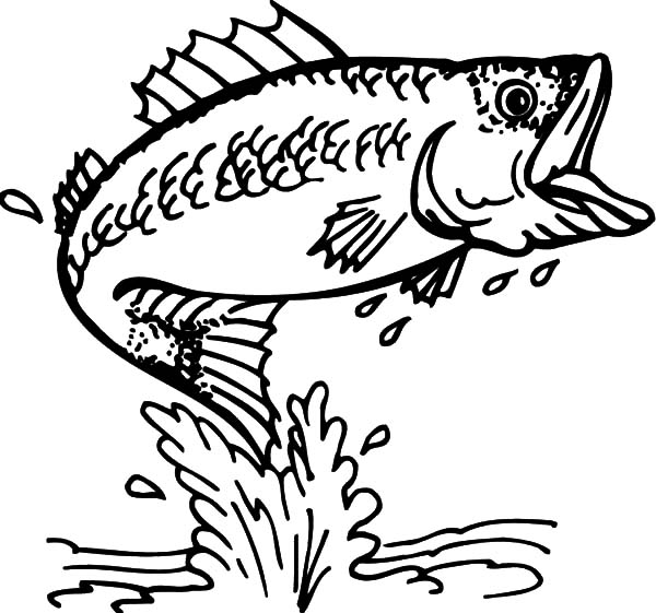 600x561 Bass Fish Coloring Pages