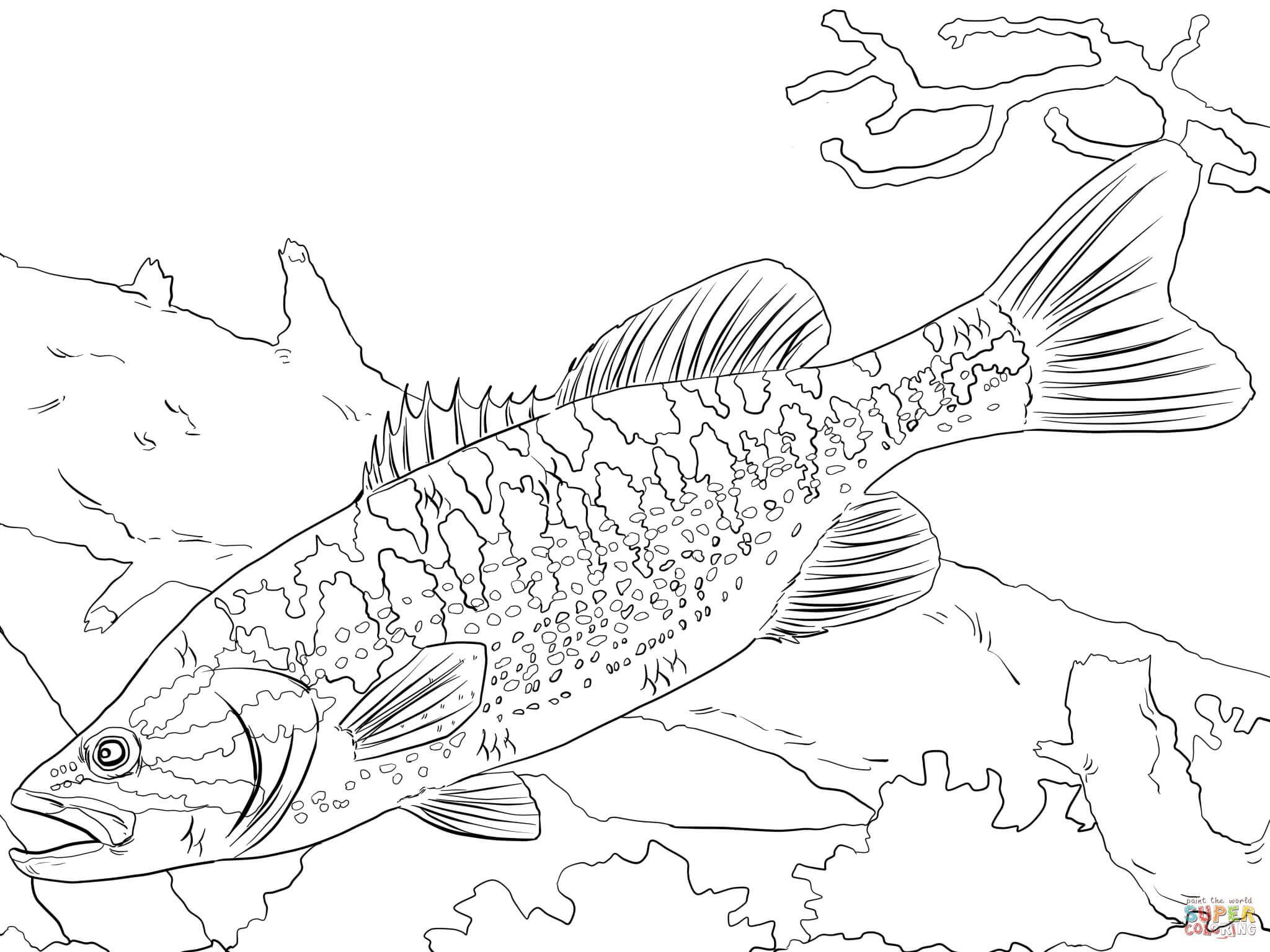2048x1536 Coloring Download, Freshwater Fish Coloring Pages Bass Fish
