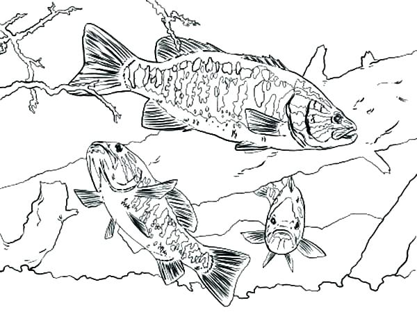 600x449 Printable Bass Fish Coloring Pages