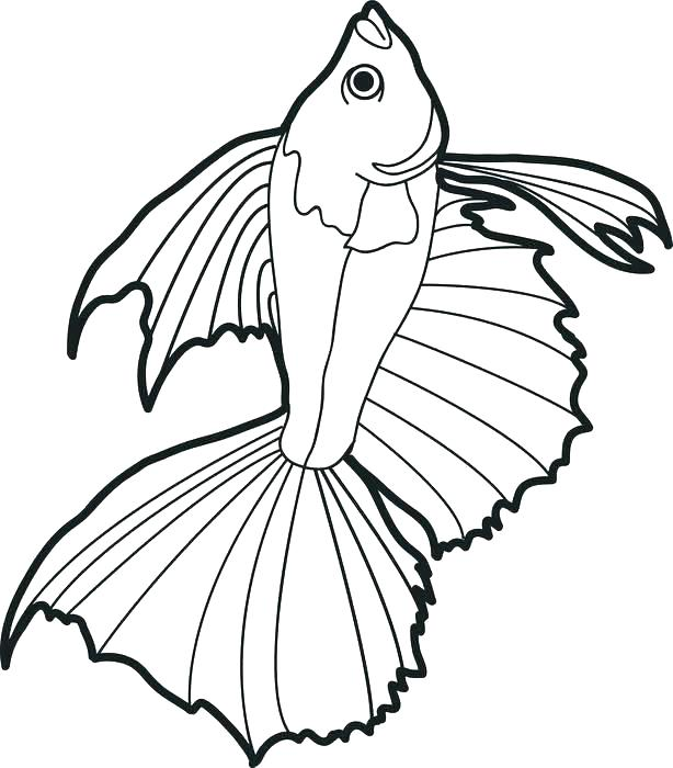 614x700 Bass Fish Coloring Pages