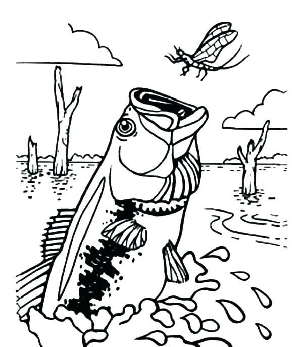 600x687 Bass Coloring Pages Striped Bass Coloring Page Free Bass Fish