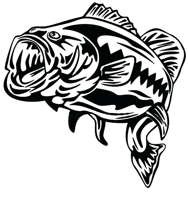 600x643 Bass Coloring Pages Striped Bass Coloring Pages