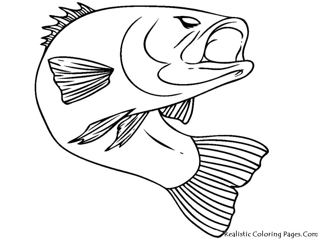 1024x768 Bass Fish Realistic Coloring Pages Coloring Pages
