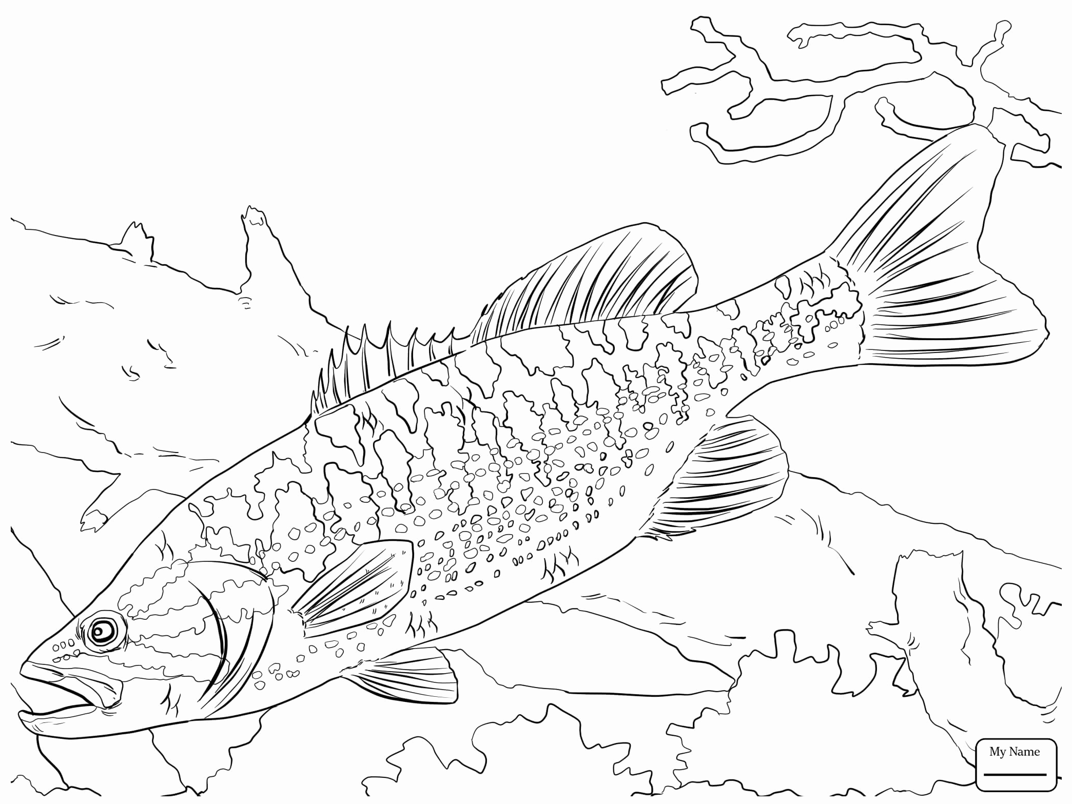 2089x1567 Fish Coloring Pages Of Bass Fish