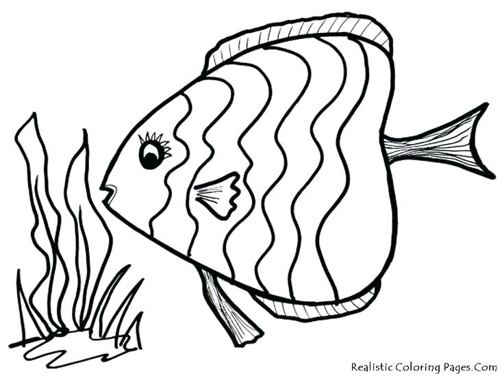 736x552 Free Fish Coloring Pages Coloring Pages Of A Fish Download Adult