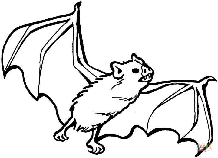 720x523 Bat Coloring Sheet